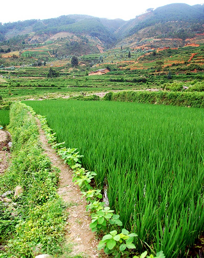Crops resilient to changing climate in the offing