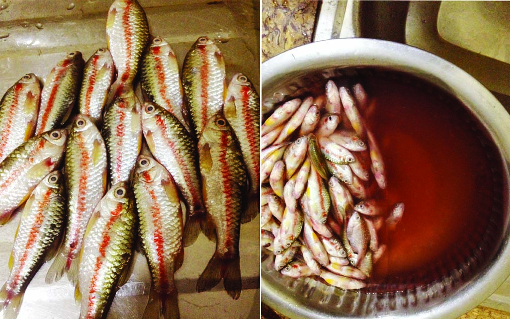 Fishes too are now adulterated
