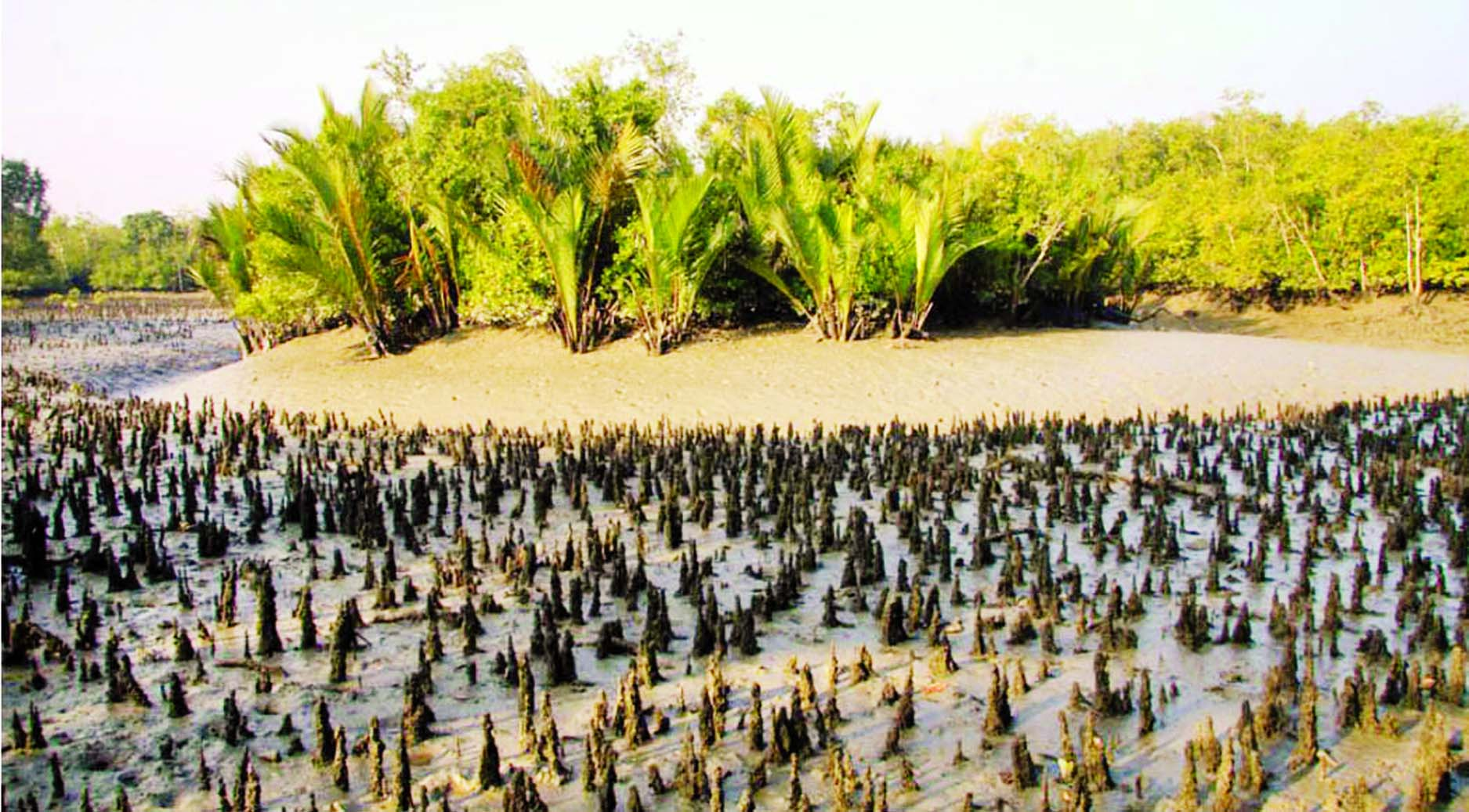 Floral life of Sundarbans at stake