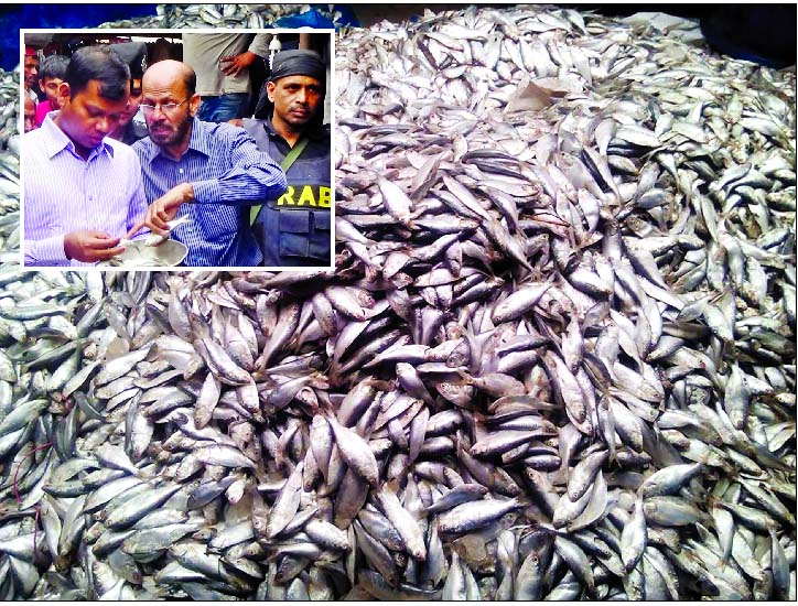 RAB-led magistrate (inset) seized huge `Jhatka fish` from city's Jatrabari area on Tuesday for catching Jhatka fish illegally.
