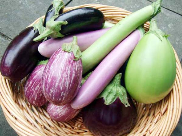 Health benefits of eggplant