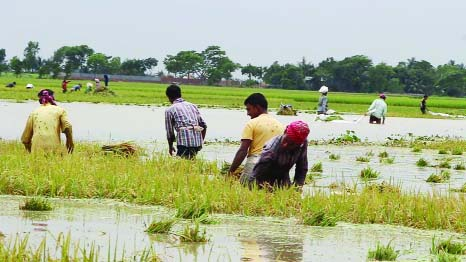 Govt  provides support to flood- hit  haor people