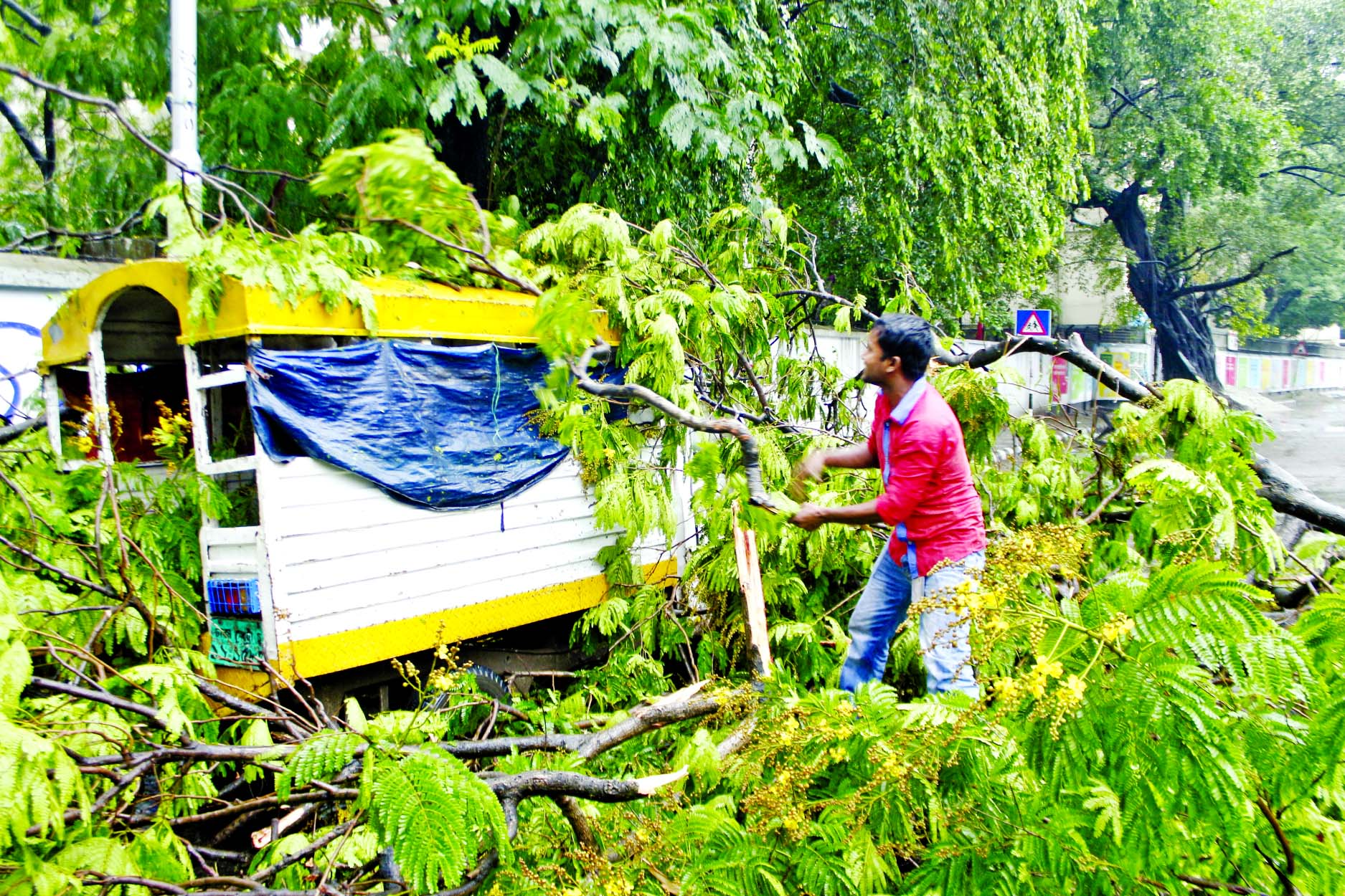 Three passengers received injuries when a tree fell down on a tempo in front of Curzon Hall of Dhaka University as Nor'wester hit city on Monday disrupting road traffic also.