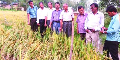 RANGPUR: Deputy Director of the Department of Agriculture Extension SM Ashraf Ali visiting a ripe zink -enriched BRRI dhan at a Field Day organised by RDRS Bangladesh in Ghopukur Village in Mithapukur Upazila as Chief Guest on Sunday.