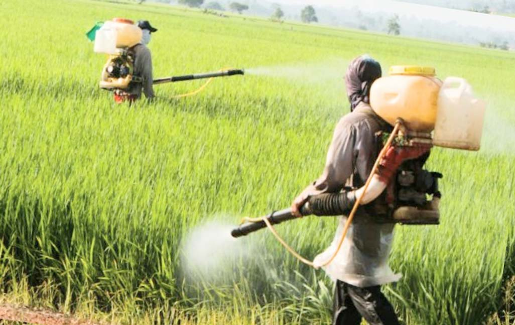 Common pesticide exposure may spur puberty in boys