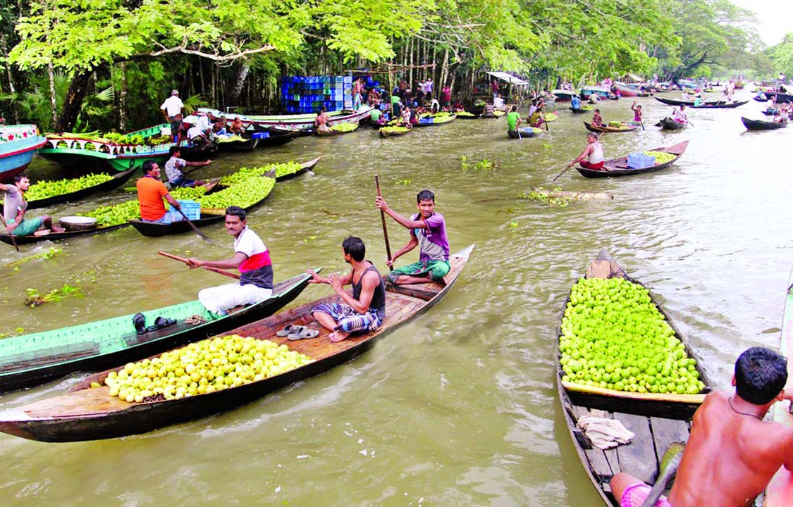 Guava's brisk trading gets momentum at the floating wholesale market during rainy days at Kirtipasha canal in Jhalokati Sadar Upazila. This photo was taken on Thursday.