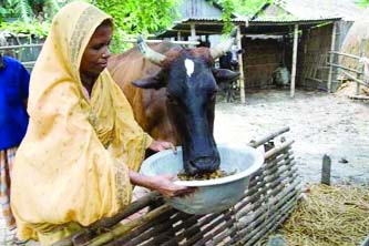 poultry farms in bangladesh essay