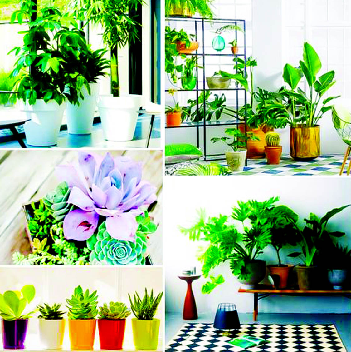 Fill in all those empty corners in your home with decorative pieces, bright colours, lamps and greenery. This would add a positive vibe your home and enhance the look of it. Opt for the colours that complement each other and provide an exuberant aura to your home
