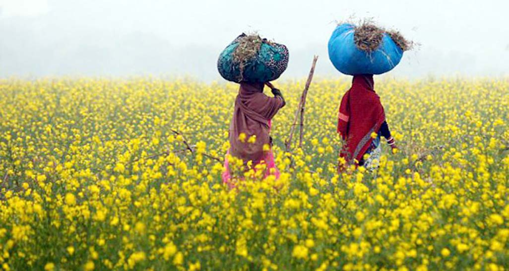 GMO labelling considers farmers as second class citizens