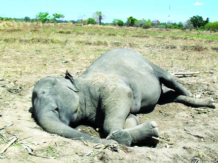 Elephant electrocution in border on the rise