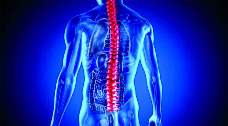 Humans share fish genes that  aid in repairing spinal cord
