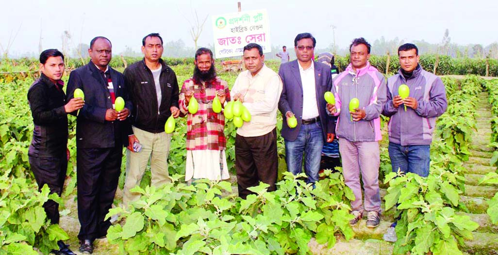 SHERPUR (Bogra): Agriculturists and guests visiting   a brinjal field of farmer Nazrul Isalm  on  Best Quality  Brinjal Exhibition and Field Day  at Mohipur Balapara recently.