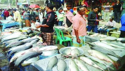 MOULVIBAZAR: A view of the  Sherpur Fish Festival at  Bramongram in Sherpur area of Moulvibazar Sadar Upazila.