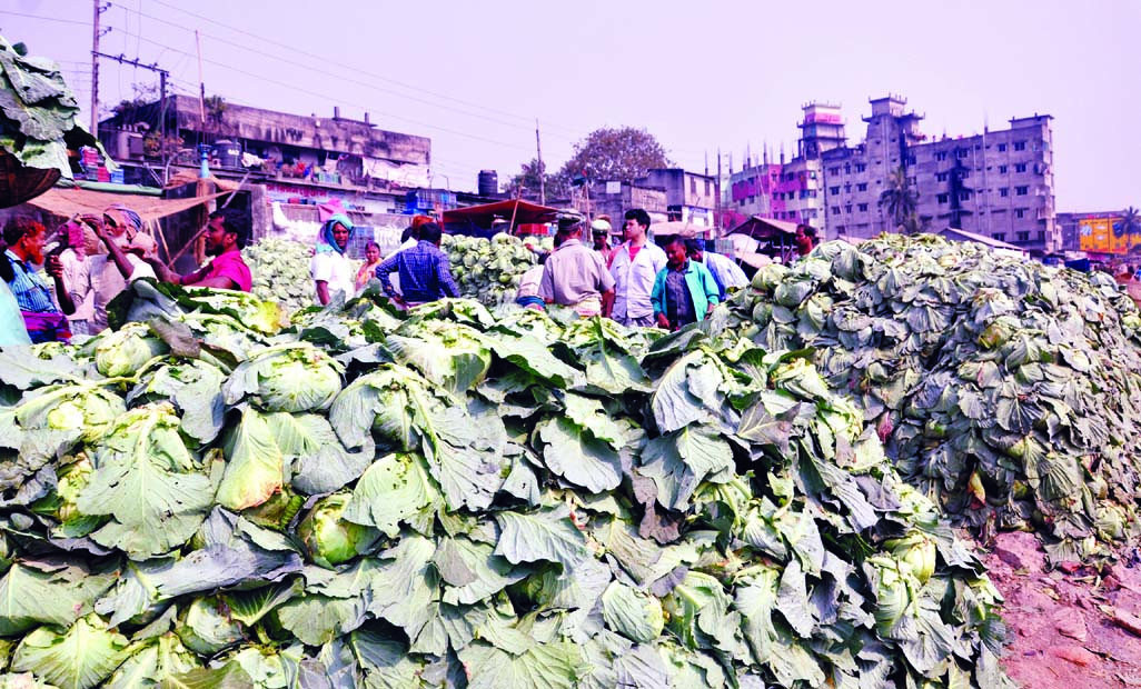 Half of the cabbage and cauliflower being rotten at ferry ghat before marketing in city brought from different region of the country, causing sufferings to poor framers. This photo was taken from Shayem Bazar ferry ghat on Saturday.