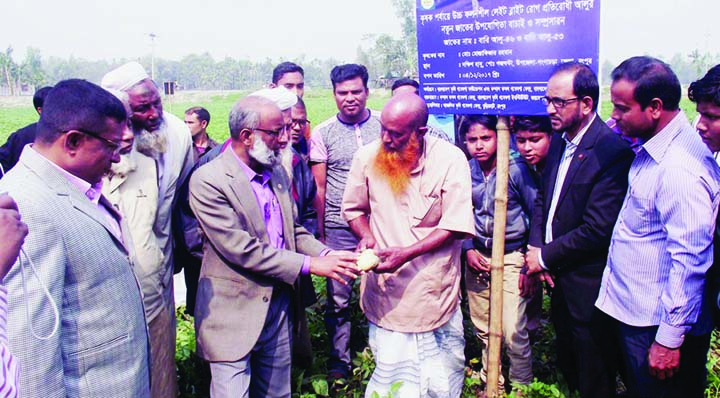 RANGPUR: Dr Lutfar Rahman, Director (Research)Bangladesh Agriculture Research Institute( BARI) visiting exhibition plots of LBR variety BARI-46 and BARI-53  paddy at Dakshin Habu Village in Gangachara Upazila as Chief Guest on Saturday.