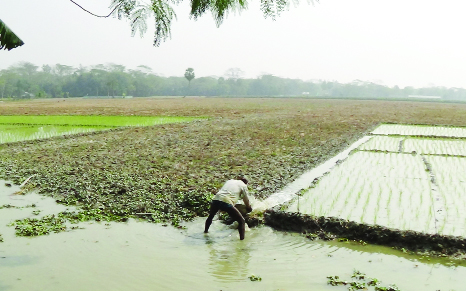 PATUAKHALI: Scarcity of irrigation water hampers  Boro cultivation  in Patuakhali .