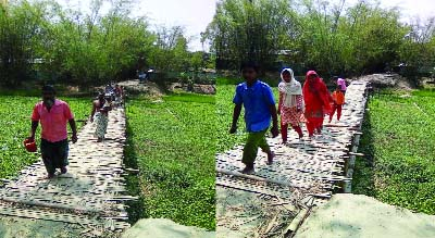 JALDHAKA (Nilphamari): People at Jaldhaka Upazila using  risky  bamboo bridge over Deghol River for  a long time . This picture was taken yesterday.