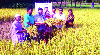 PANCHAGARH: Deputy Director of the Department of Agriculture Extension (DAE) Agriculturist  Md Shamsul Haque launching harvest of zink- enriched BRRI dhan 74 at Sarderpara Village in Sadar Upazila as Chief Guest on Sunday.