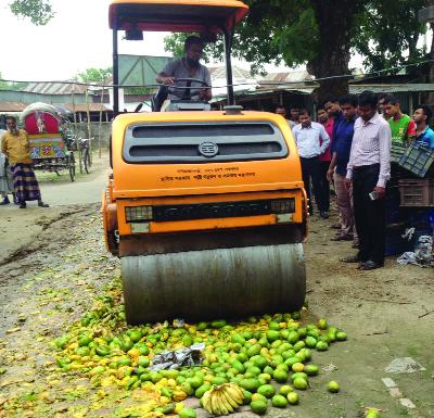 MADHUKHALI(Faridpur): Mobile court at Madhukhali Upazila destroying  10 maunds of chemically ripened mangoes and bananas on Sunday.