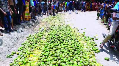 NARAIL: Mobile court destroying about 30 mounds chemical mixed  mangoes at Narail Sadar Upazila on Friday.