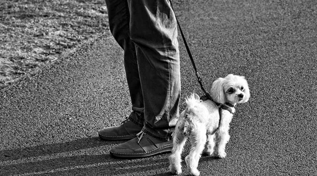 Humans may help boost dogs' problem-solving ability