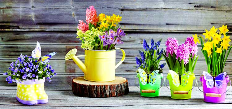 Plants to beat indoor air  pollution