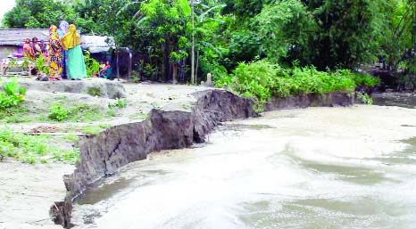 TANGAIL: Jamuna River erosion has taken a serious turn at Gorilabari Village engulfing dwelling houses. This snap was taken on Saturday.
