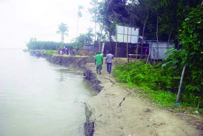 SUNDARGANJ (Gaibandha): Villages at Sundarganj Upazila are  facing  extinction   due to Teesta River erosion. This  picture was taken from Vati Kapasia area yesterday.