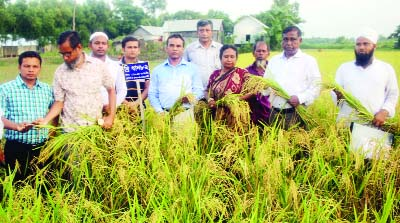 MURADNAGAR(Cumilla):  Dr Tomal Lata Aditah, Director(Research ), BRRI , Gazipur inaugurating harvesting of BRRI dhan as Chief Guest at Muradnagar Upazila recently.