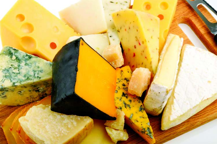 How cheese shaped  human evolution