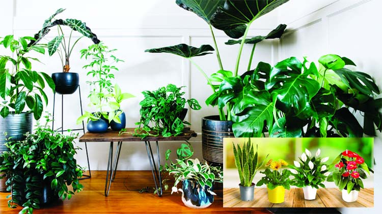Purify the air in your house with  these easy-to-grow indoor plants