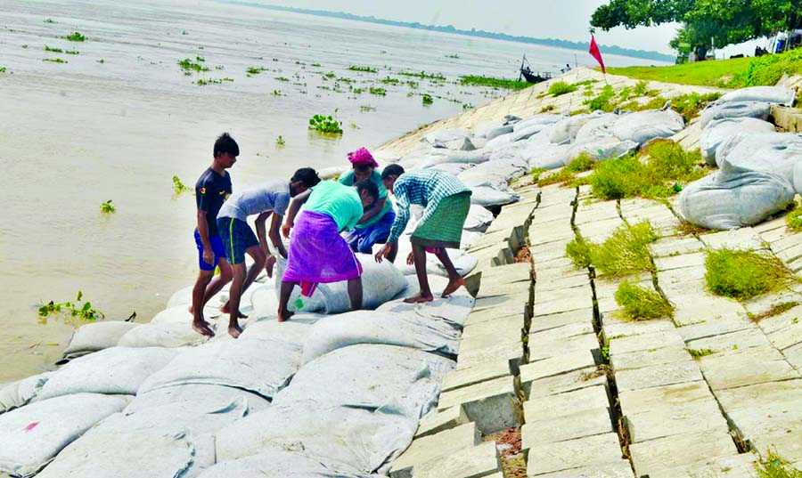 Due to receeding of the water from Padma, local people started dumping there geo-bag sand in order to prevent the erosion. The photo was taken from Rajshahi zone on Monday.
