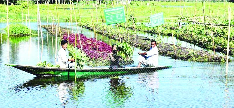 Landless farmers getting solvency in Rangpur
