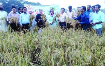 DAMUDYA (Shariatpur): Dilruba Sharmin, UNO, Damudya inaugurating Aman paddy harvest  marking the Nabanna  Festival at the Upazila yesterday.