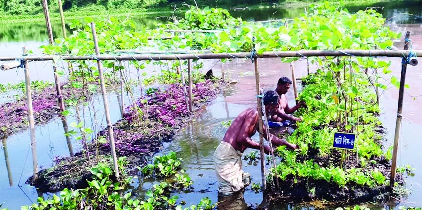 Floating vegetable farming gains popularity in Sylhet