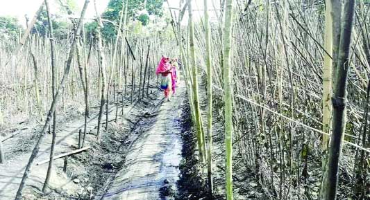 RAJSHAHI: Some 75 betel leaf orchard was gutted in a devastating fire at Mohanpur Upazila in Rajshahi district recently.