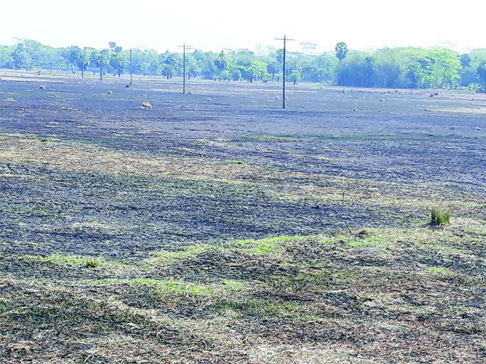 GOPALGANJ:  Farmers of Shingipara under Tungipara Upazila in Gopalgonj  used the fire burn method on their crop land. This picture  was taken on Tuesday.