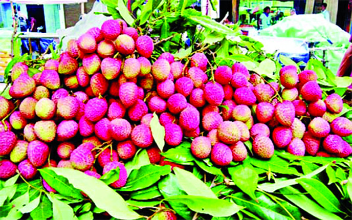 Litchi trading goes on in full swing