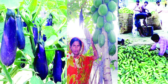Bumper summer vegetables output expected in Rangpur