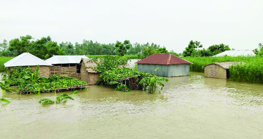 ULIPUR (Kurigram):  Most of the villages at Ulipur Upazila have been flooded as water level rise in Brahmaputra River . This picture was taken from  Saheber Alga Union  yesterday.