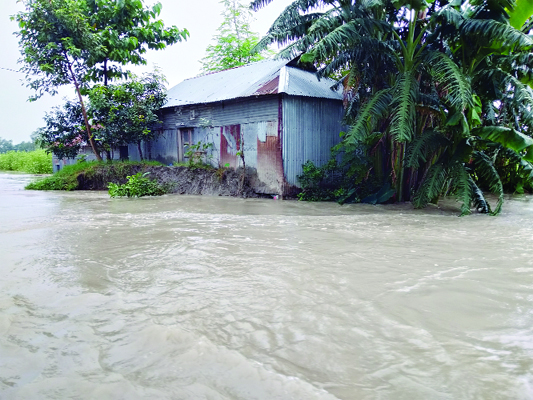 GAIBANDHA:  Dwelling houses and crop lands were inundated at  Barulia area in Gaibandha Sadar Upazila due to flood. This photo was taken on Sunday.