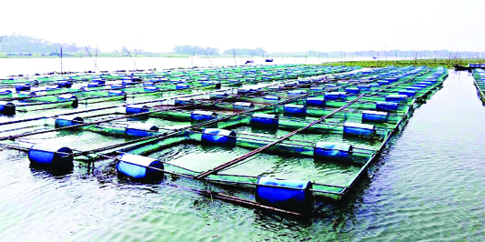 Fish farming in cage gains popularity in Narsingdi