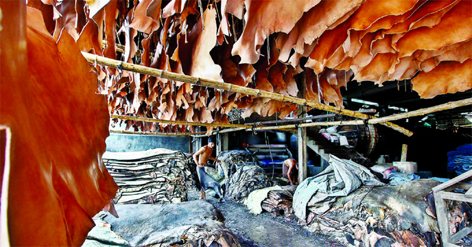 Tanners to buy rawhide from today