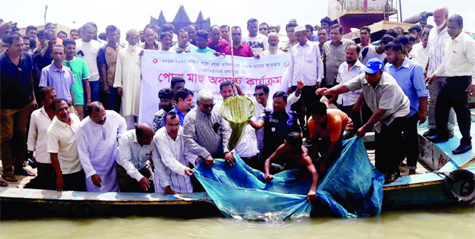 BANARIPARA(Braishal): Md Shaha Alam MP releasing fish fries in Sandha River in Banaripara on Monday.