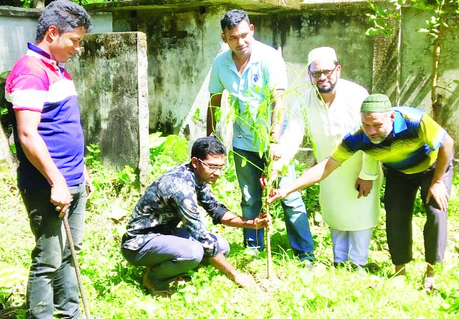 BETAGI (Barguna): Drubotara Development Foundation launched a plantation campaign at Betagi Upazila on Thursday.