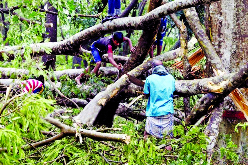 Bulbul hits coastal belts: 17 dead, 5000 houses ravaged: Trees, electric poles uprooted: Crops on two lakh hectares damaged