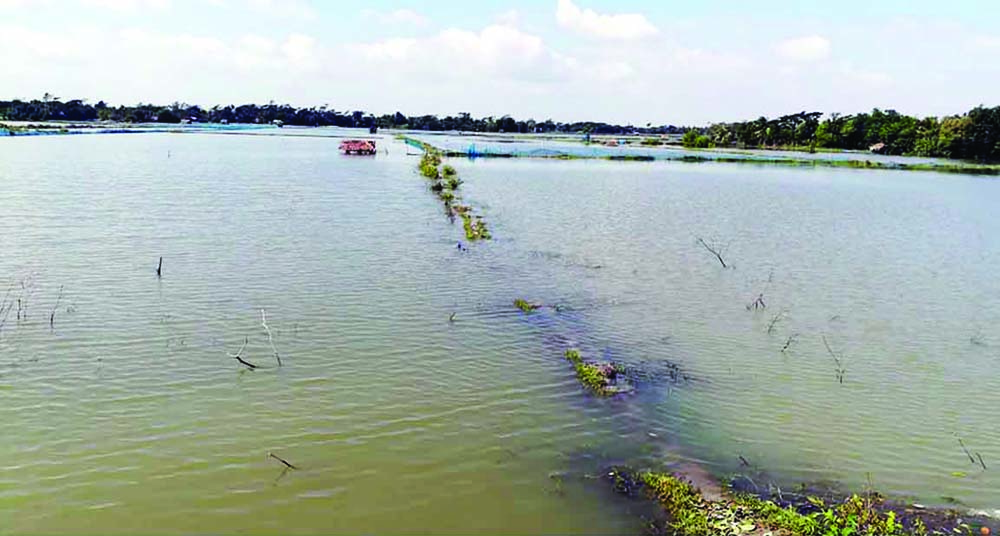 MONGLA:  Shrimp clusters were washed  away by cyclone 'Bulbul' on Sunday.