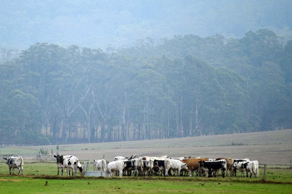 Rainfall brings respite to Australia bushfires