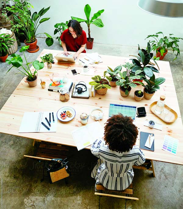 Desk plants can reduce stress at work