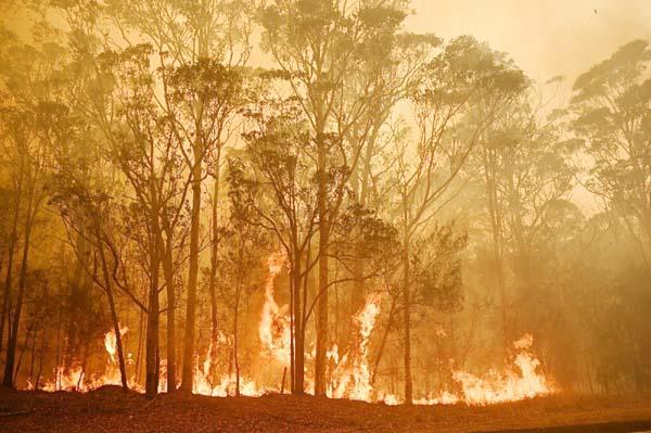Bushfire crises hit 18m Australians
